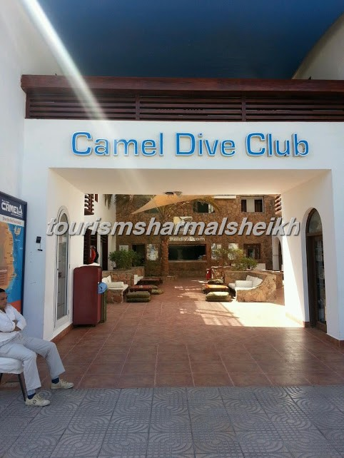 Came.l Dive Club & Hotel1