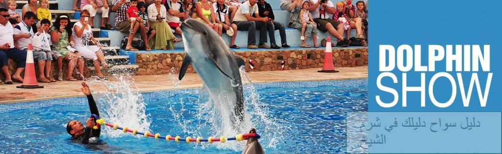 dolphina1