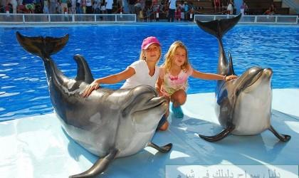 عروض الدلافين في شرم الشيخ