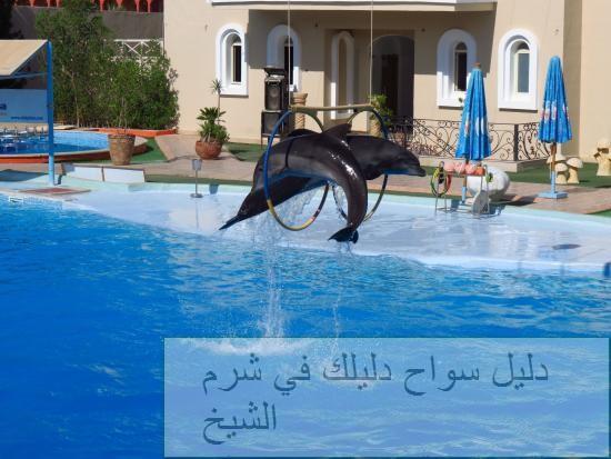 dolphina8